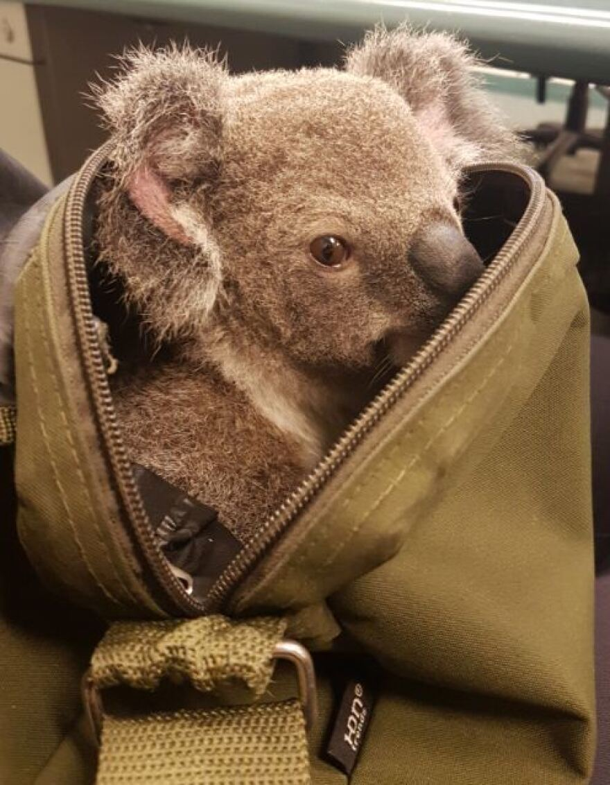 Police say the joey appears to be in good health.