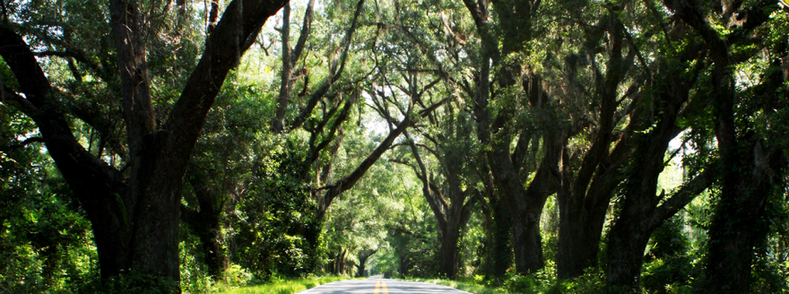 canopy_road_via_leon_trees.png