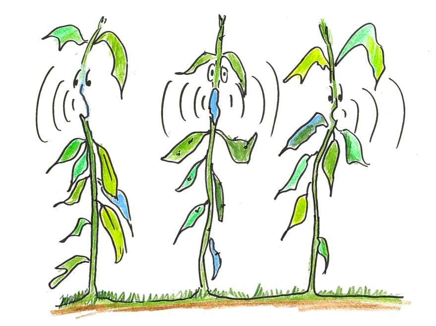 6. Neighbor plants react to a plant crying out.