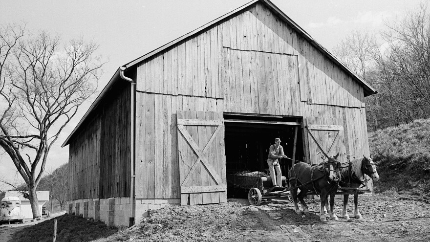 Wendell Berry, America's foremost farmer-philosopher, with horses on his farm.