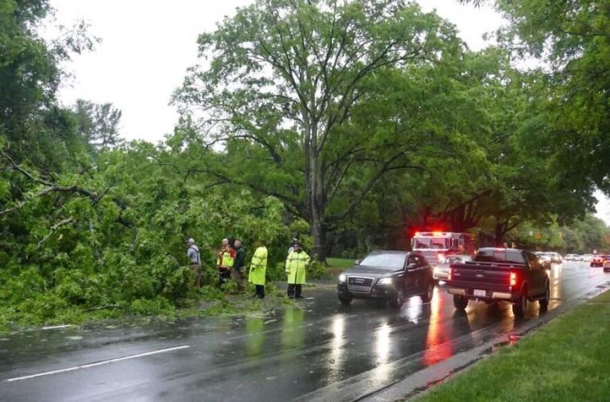 fallen tree blocking Sharon Road