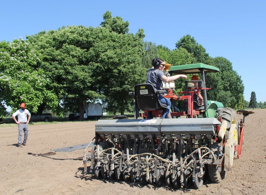 Oregon State University researchers planting hemp seeds at the OSU North Willamette Research and Extension Center in Aurora, Oregon.
