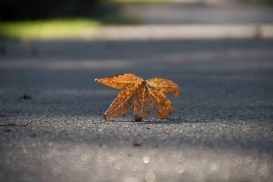 Ann Aurbach's leaf