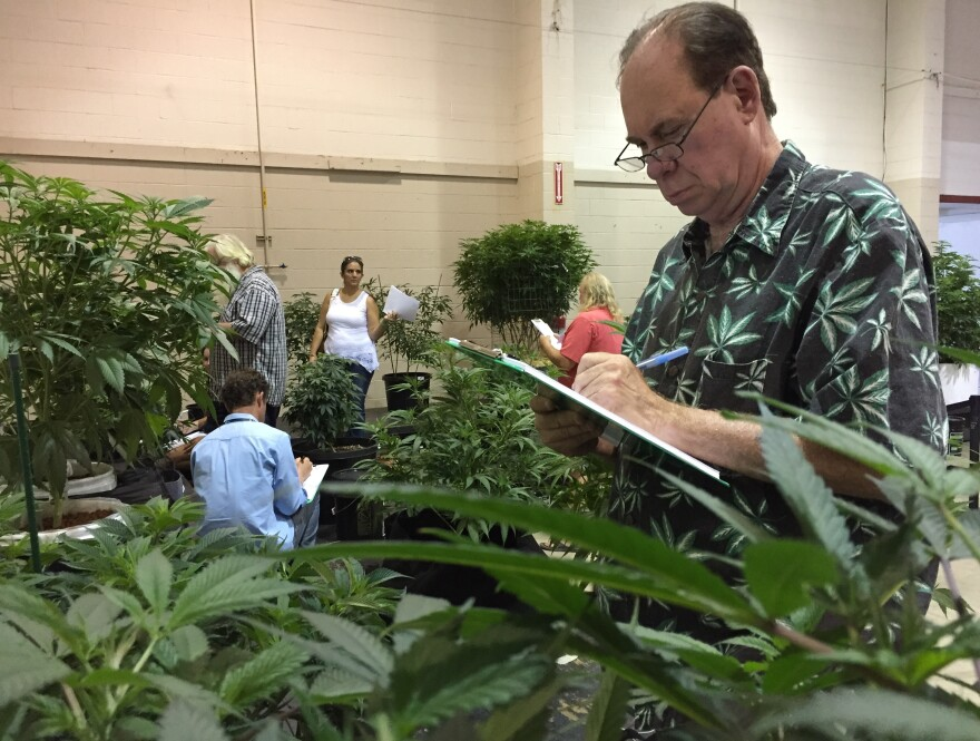 "Ed Rosenthal, nicknamed the ""Ganja Guru,"" judges marijuana plants on Aug. 13 at a competition designed to select nine specimens for display at the Oregon State Fair."