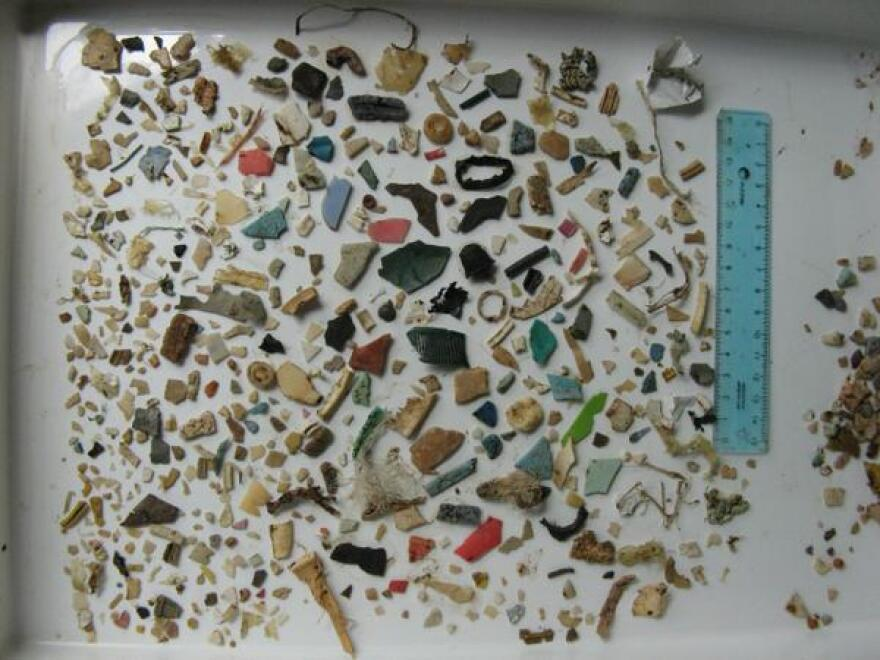 Plastic debris found in the stomach of a juvenile green turtle accidentally captured in Bahía Samborombón, Argentina.