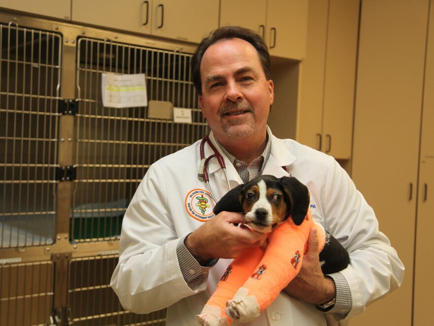 Dr. Erik Clary holds Milo on Wednesday at Oklahoma State University's Center for Veterinary Health Sciences. Clary and his team said it will take intensive rehabilitation for Milo to learn to walk.