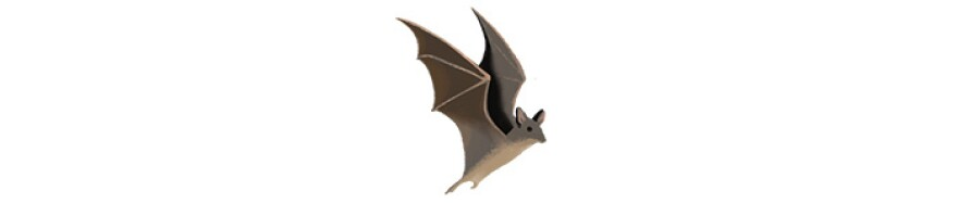 A bat   Illustration by Cornelia Li for NPR