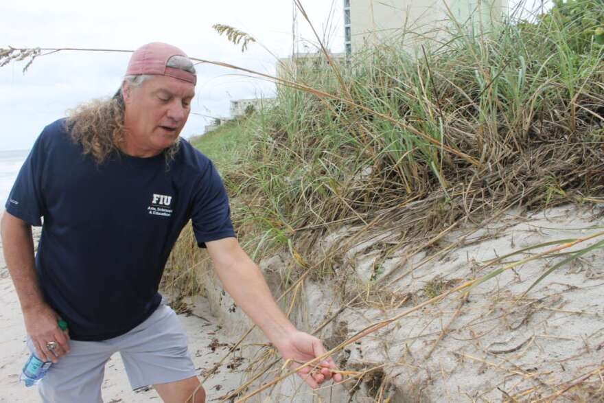 Coastal geologist Randall Parkinson points near where Hurricane Dorian sent water inland, eroding dunes that protect coastal infrastructure. Photo by Amy Green