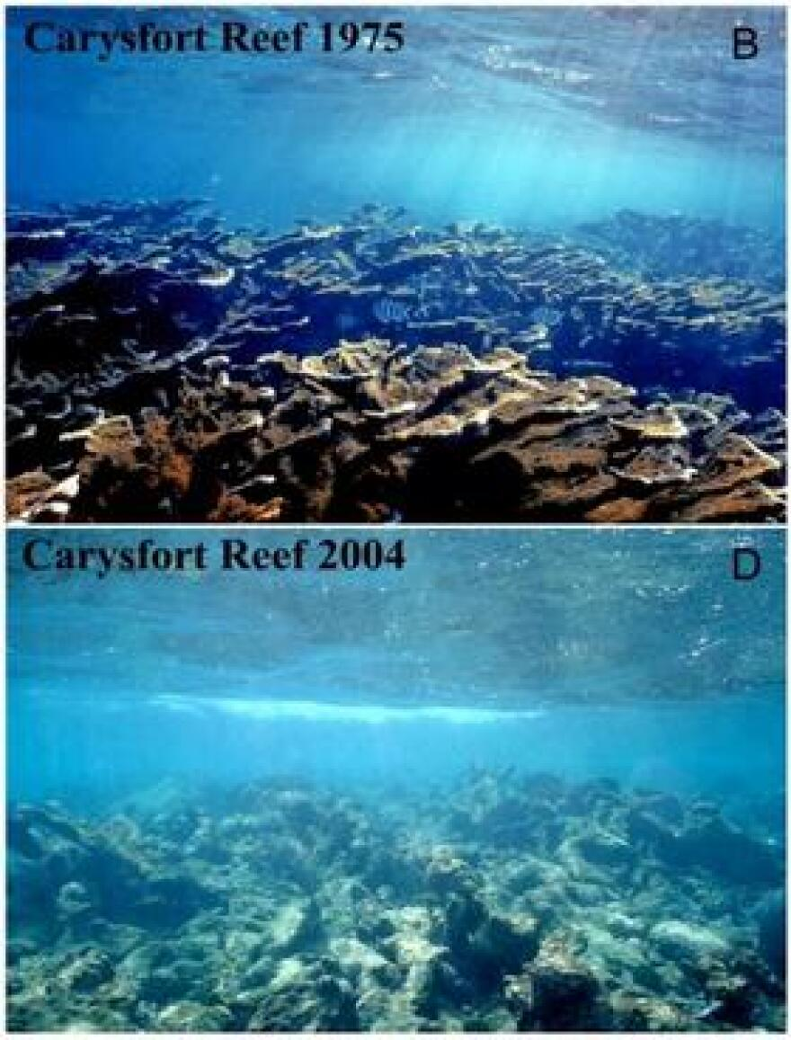 Jeremy Jackson was the lead author on a study that surveyed the changing health of coral reefs throughout the Caribbean over 50 years. That included reefs like Carysfort, off the Upper Keys.