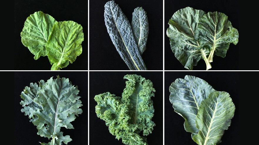 """To develop a new variety of kale tailored to American palates, plant researchers are surveying consumer attitudes on the leafy green. Study participants took home the six varieties of kale pictured. The takeaway so far? """"Be less like kale."""""""