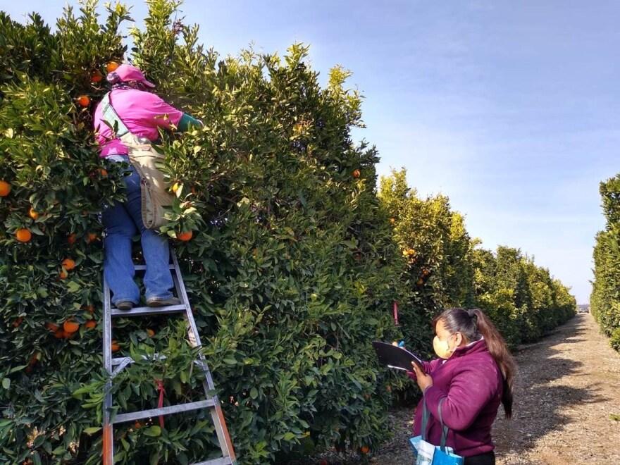 farmworkers pandemic3.jpg