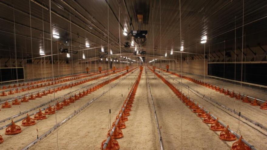 The first set of barns that eventually will supply chickens for the Costco project was recently completed near the town of Hooper, Neb. Approximately 20,000 breeding hens will be raised here.