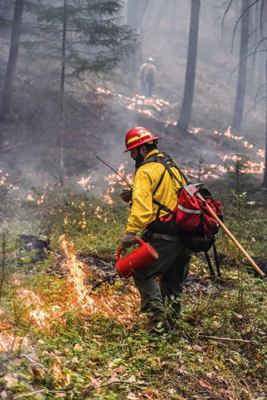 Firefighters sometimes create a barrier for the flames by igniting the undergrowth ahead of wildfire flames.