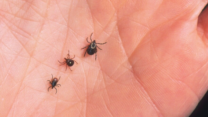 A harmful trio (from left): a deer tick, lone star tick and dog tick.