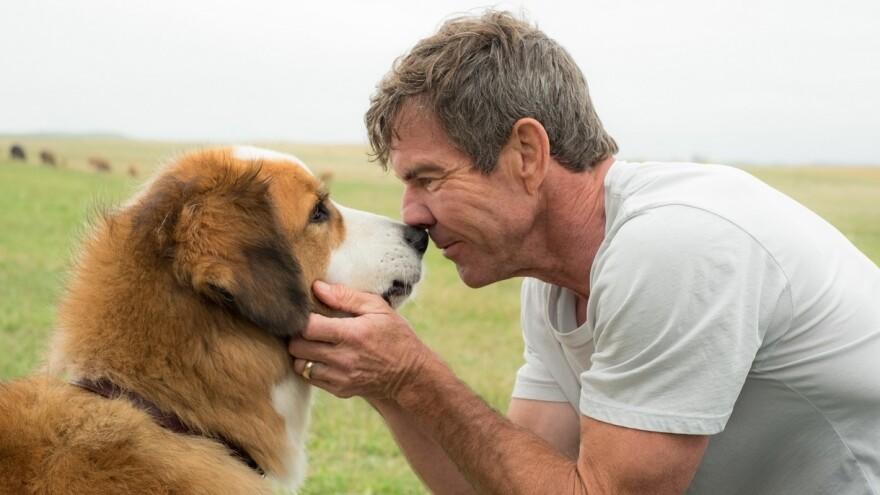 Nose Thyself: Buddy (voiced by Josh Gad) and Ethan (Dennis Quaid) get existential in <em>A Dog's Purpose</em>.