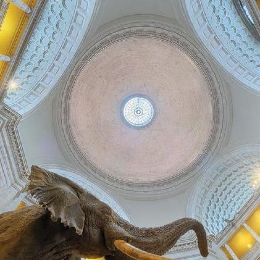 A Guastavino ceiling in the Smithsonian Institution's Museum of Natural History in Washington, D.C.