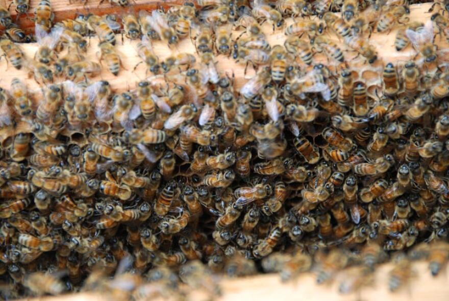 Bees are responsible for pollinating a quarter of human food.