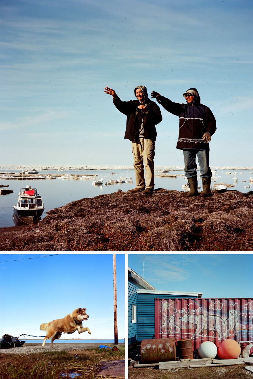 Top: Bruce Inglangasak (left) and his friend Herman Oyagak look for a way through the sea ice that is close to shore near Alaska's Arctic National Wildlife Refuge in 2018. Left: Coco chases his ball. Inglangasak and his daughter adopted Coco while visiting their relatives in Aklavik, Canada, in 2017. Right: Polar bear art outside of the home of Marie and Eddie Rexford in Kaktovik, Alaska.