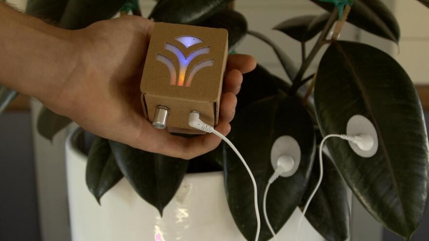 Data Garden's MIDI Sprout device is designed to translate electrical impulses from plants into musical notes.