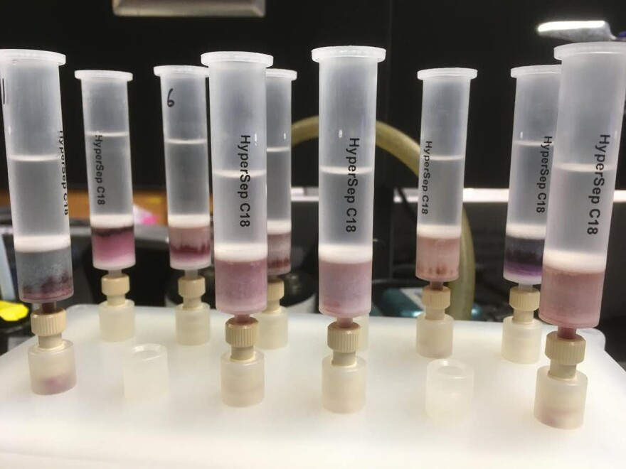 Extracting tannins from red wines in the lab to characterize their chemical structure.