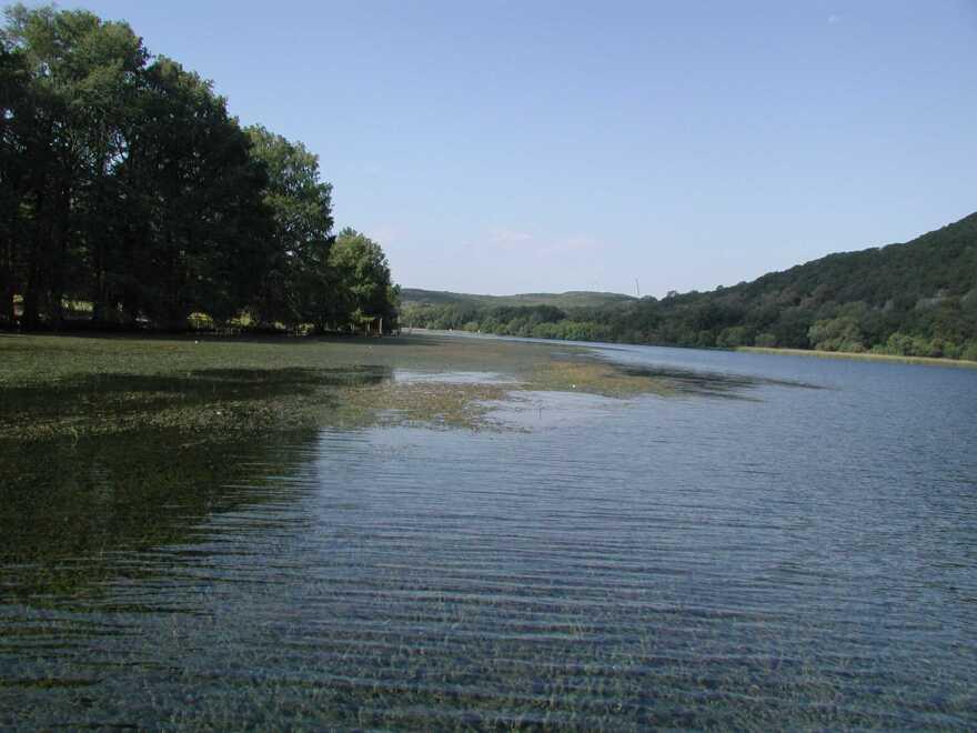 Hydrilla on Lake Austin