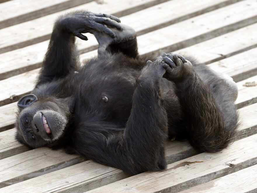 Chimps still aren't considered people.