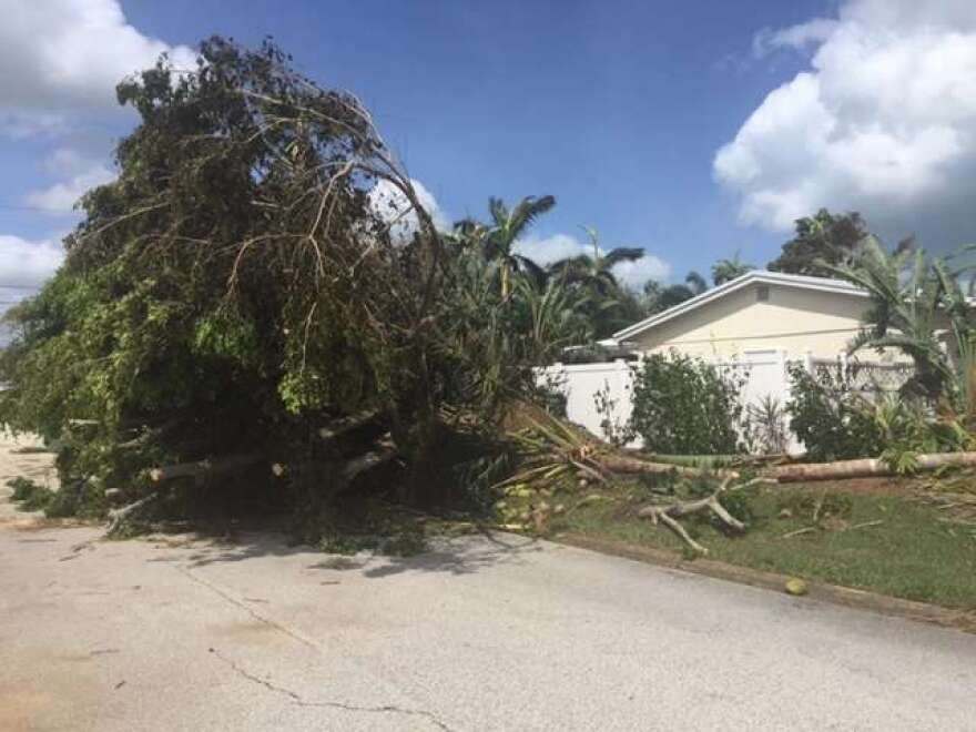 Tornadoes took this tree down in Indialantic.
