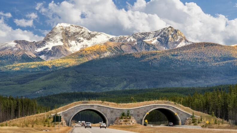 Infrastructure Bill Would Pave Path For More Wildlife Bridges, Tunnels