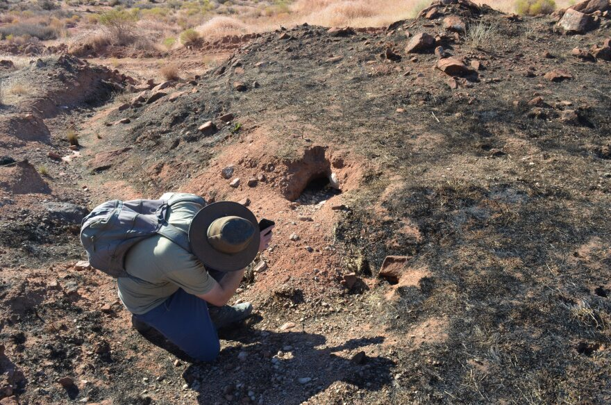 Mojave Desert Tortoise Biologist Burrow LP.JPG
