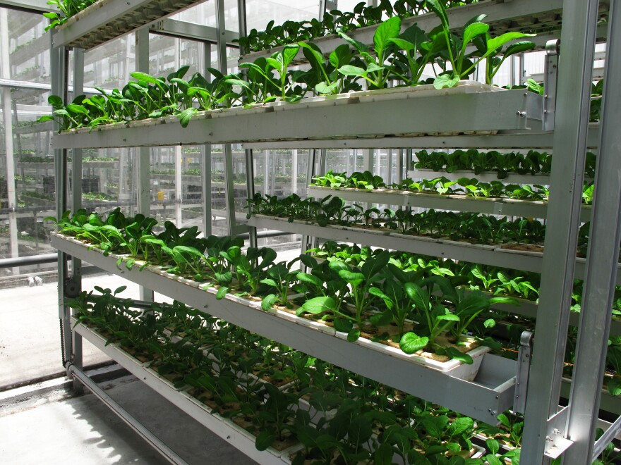 Sky Greens' crops grow on 30-foot-high A-frames in water-powered rotating troughs.