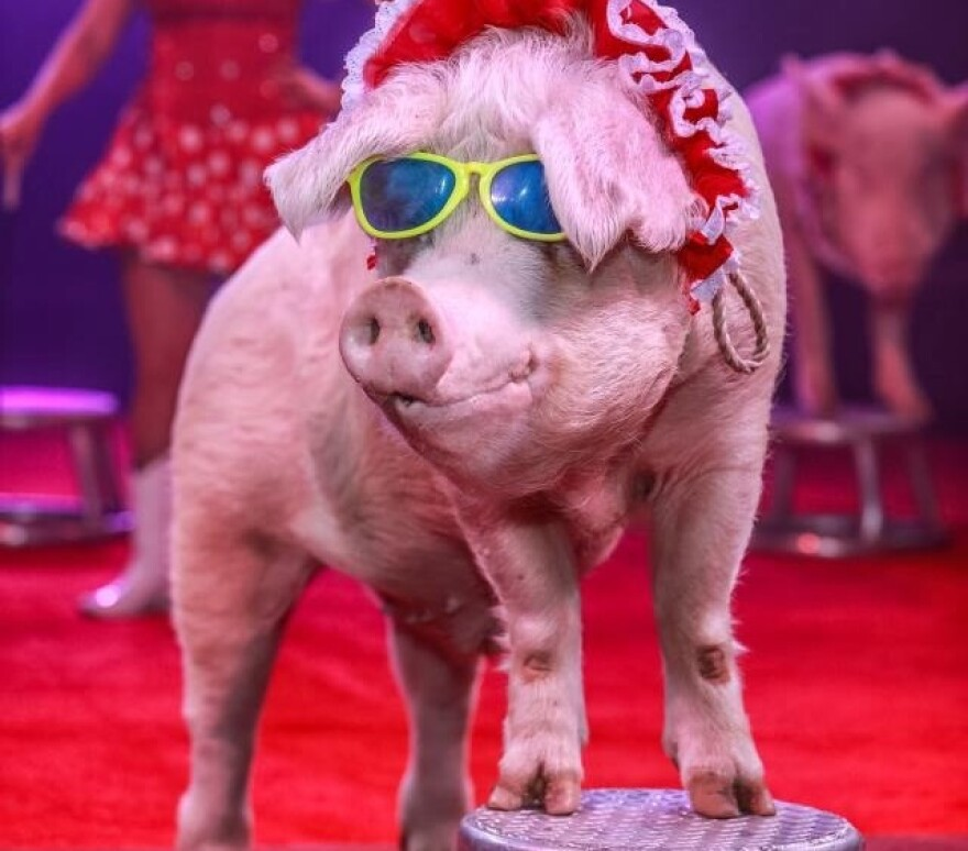 Cuzin Grumpy's Pork Chop Revue is among the new acts featured in Circus Flora's 2018 season.