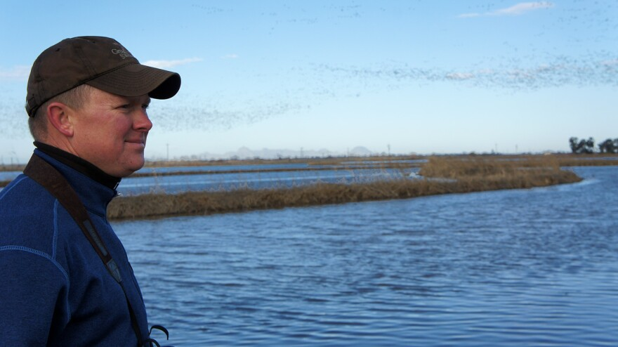 Rice farmer Douglas Thomas watches snow geese take flight over his rice fields in California's Central Valley.