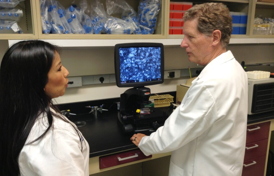 Dr. Richard Schlegel and postdoctoral fellow Nancy Palechor-Ceron use a microscope to look at human epithelial cells growing on mouse fibroblasts at Georgetown University Medical Center.
