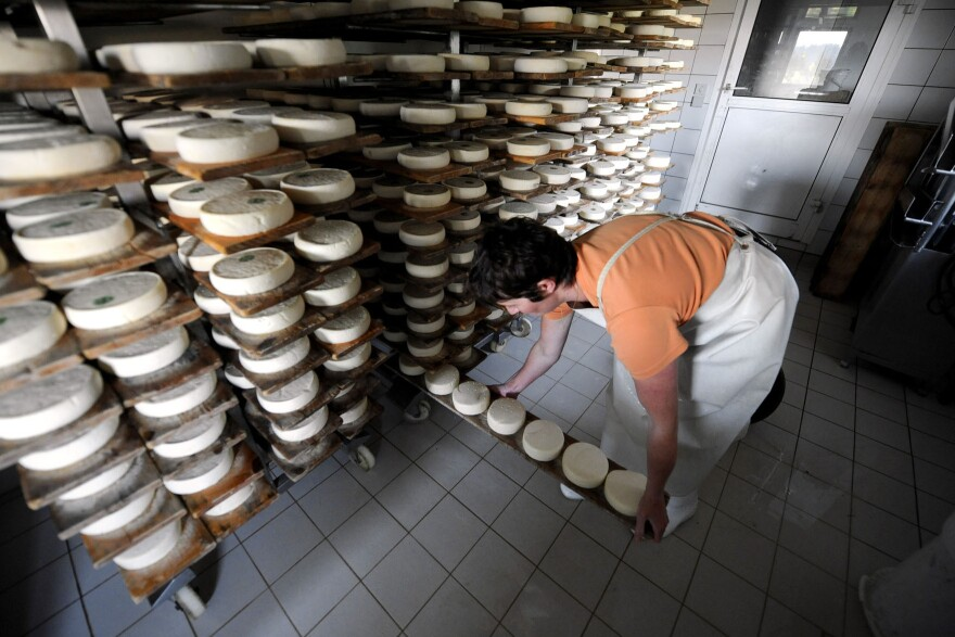 A French cheesemaker sets up wheels of Reblochon, a semi-soft cheese made from raw cow's milk, for maturing in a farm in the French Alps. Anglophone cheesemakers say translating a French government cheese manual will help them make safer raw milk cheese.