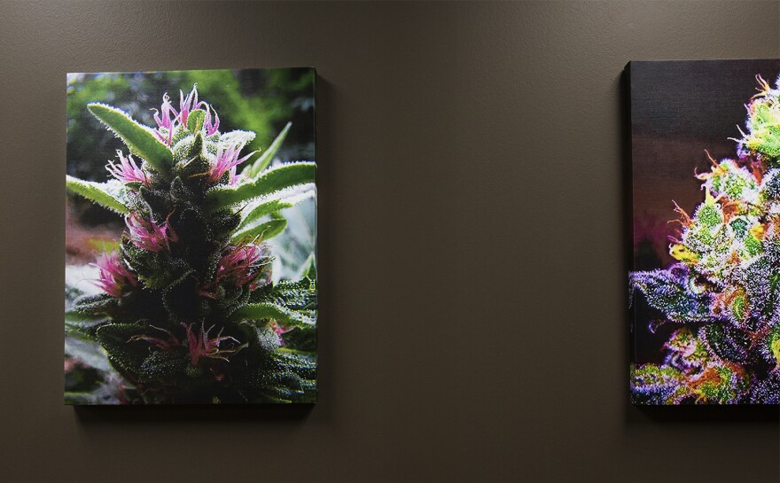 Colorful photos hang on the walls at HCI Alternatives in Collinsville. The marijuana dispensary is set up like a typical doctor's office.