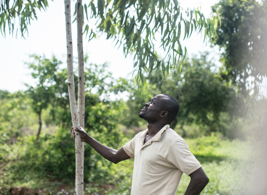 Otieno is hoping that his tree venture will be the one that finally boosts his family out of poverty.