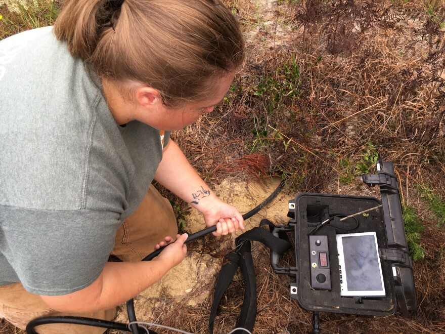 Savannah McGuire with the Georgia Department of Natural Resources maneuvers a camera down into a gopher tortoise burrow.
