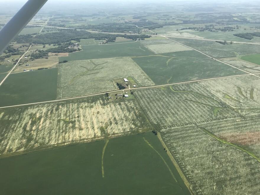 crop damage.JPG