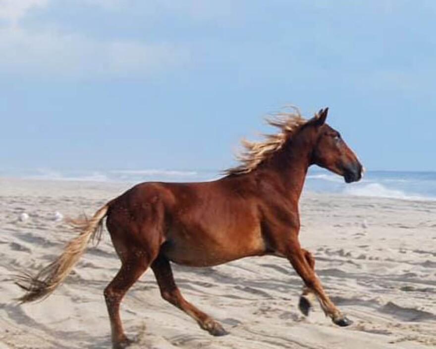 king_of_the_wild_horses.jpg