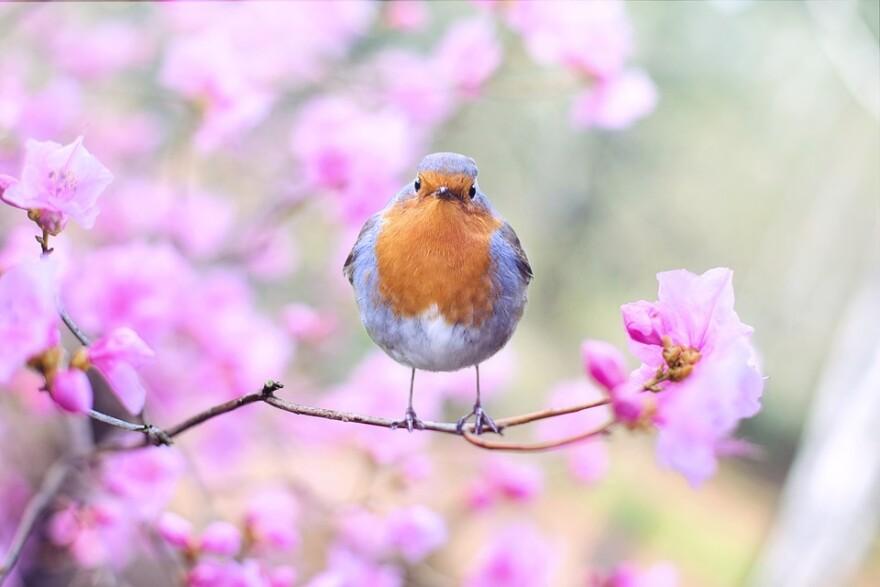 bird_looking_at_camera.jpg