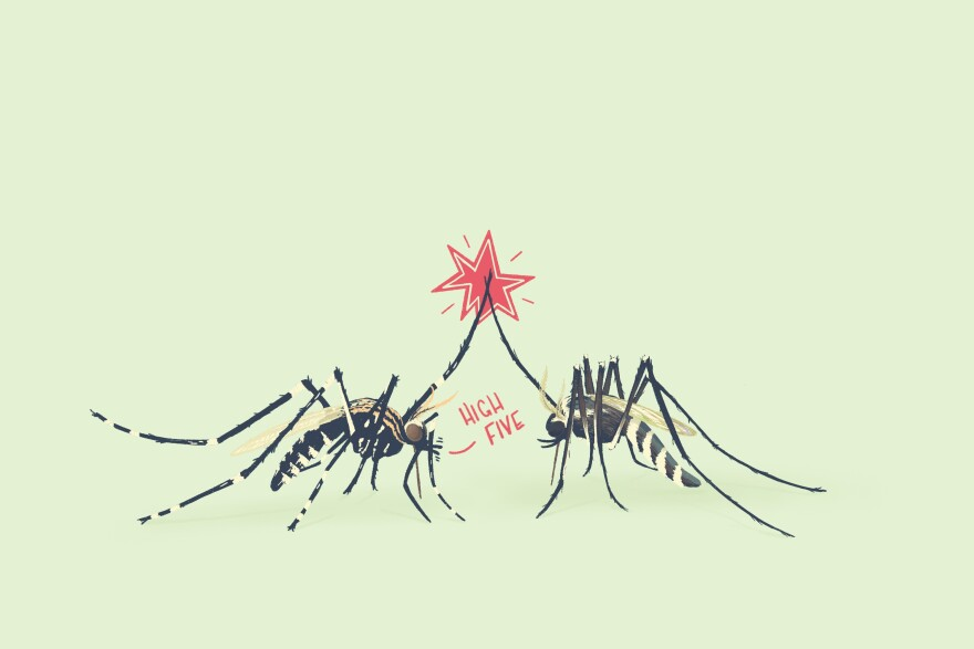 A cartoon of two mosquitoes giving each other high-fives.