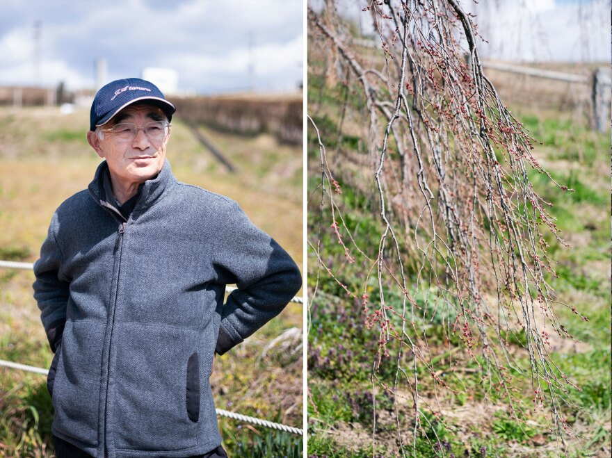 Left: Fusayuki Hashimoto, 72, lives down the street from the Takizakura. Right: The branches of the tree cascade toward the ground, covered with buds on the verge of blossoming.