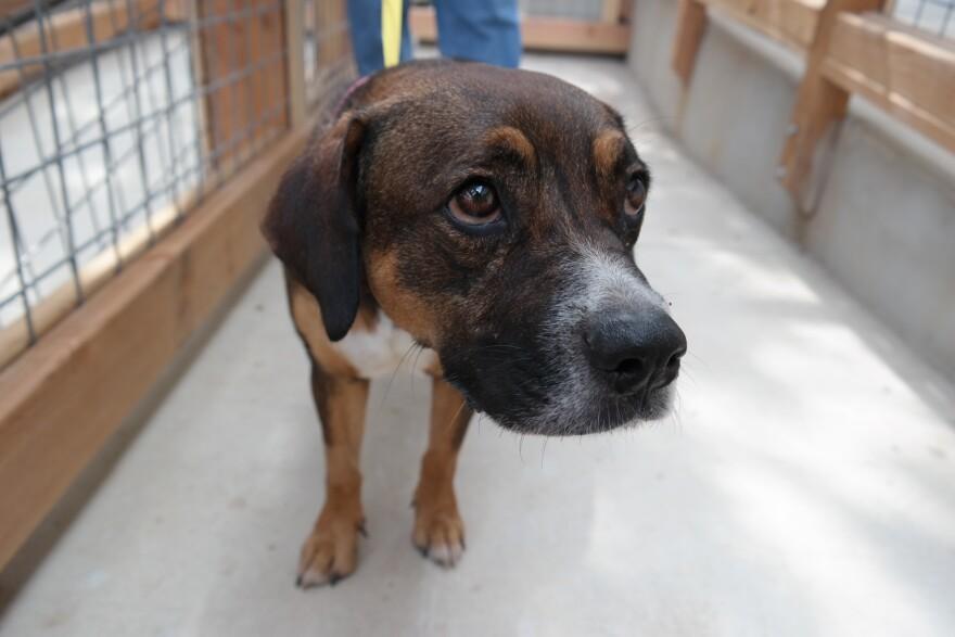 paul_jolly_adoption_center_dog.JPG