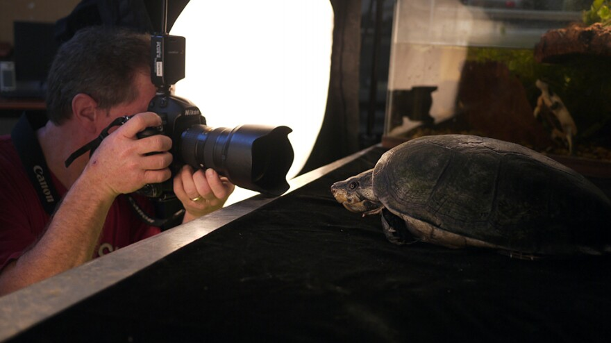 Photographer Joel Sartore captures a big-headed Amazon river turtle at the National Aquarium in Baltimore.