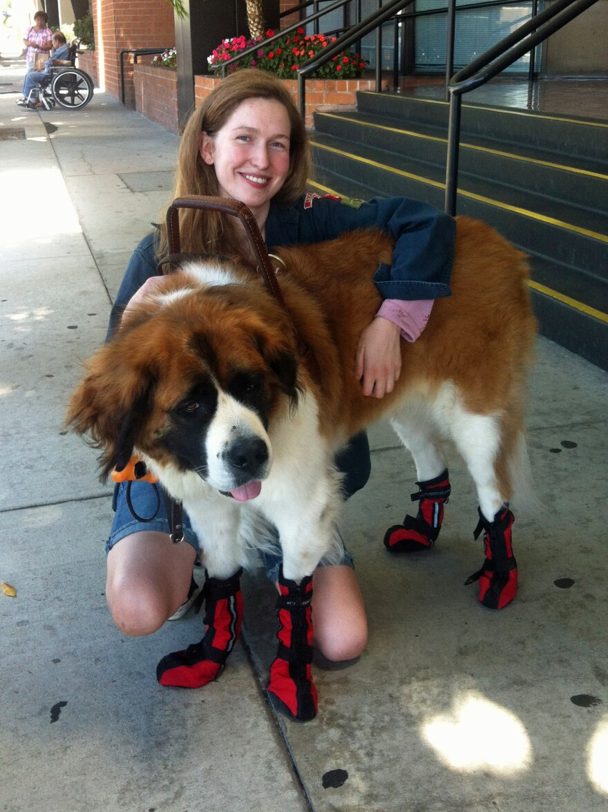 Lauren Henderson and her service dog, Phoebe, in Los Angeles. Henderson says she's seeing more dogs in vests that don't appear to be legitimate service dogs.