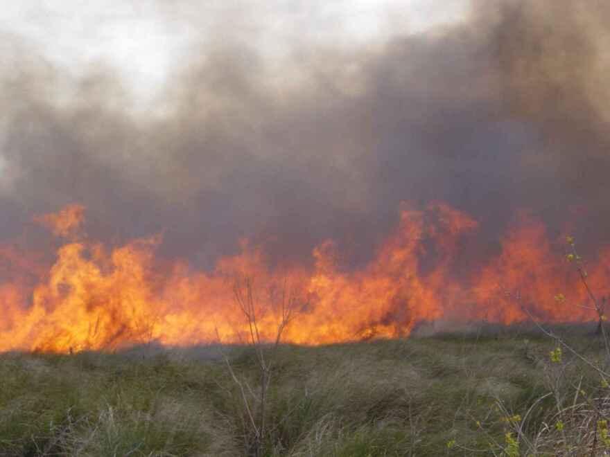 Fire, Forest FIre