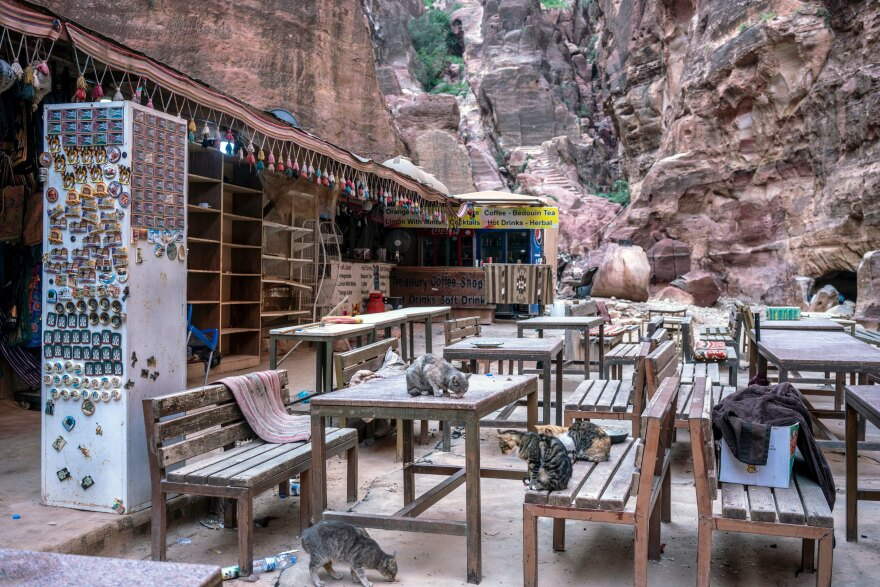 The cats in Petra are left without tourists and tourism workers to feed them.