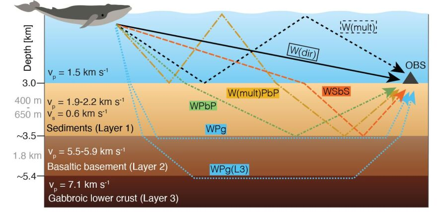 Oregon State University graphic showing how sound waves from fin whale song interact with the ocean and its floor.