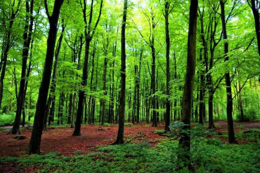 Cedar Bog Nature Preserve in Urbana
