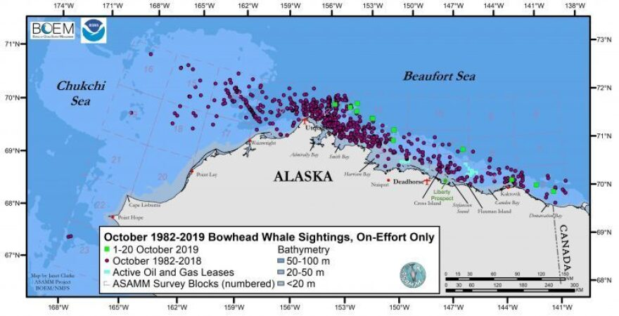 A chart from Megan Ferguson's research shows how bowhead spottings during surveys this October (the green squares) were farther offshore than most of the other bowhead spottings from October surveys dating back to 1982 (the purple circles).